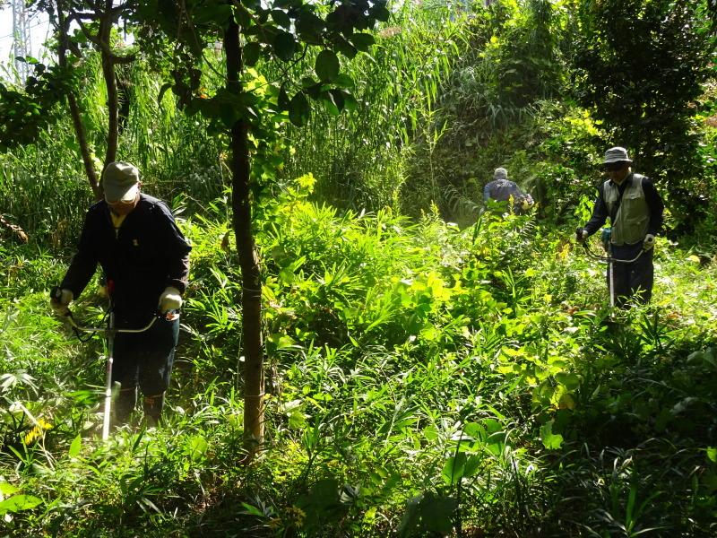 椿の森の草刈り in うみべの森_c0108460_18331878.jpg
