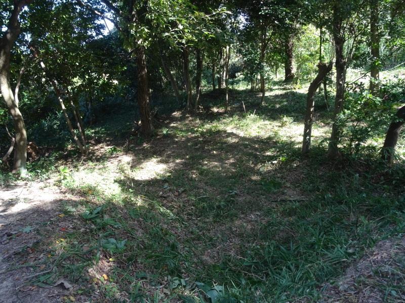 椿の森の草刈り in うみべの森_c0108460_19345042.jpg