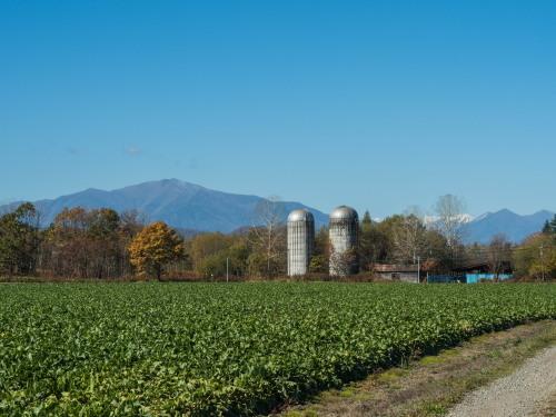 晩秋の農村風景を彩る・・カラマツの紅葉が始まりました!_f0276498_19580233.jpg