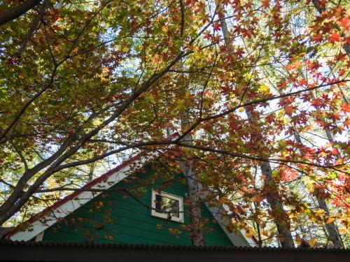 晩秋の農村風景を彩る・・カラマツの紅葉が始まりました!_f0276498_19590871.jpg