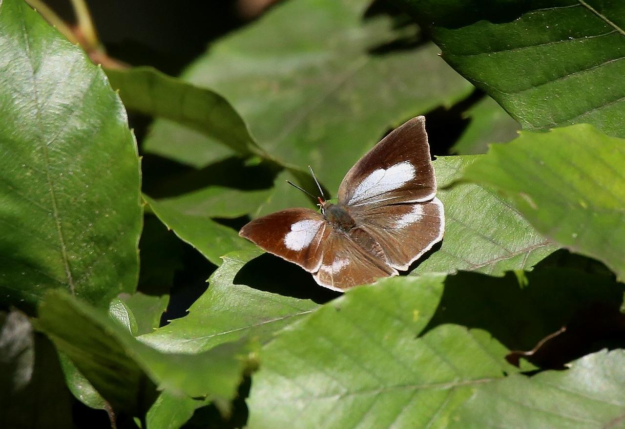 蝶コレクション_f0296999_16175291.jpg