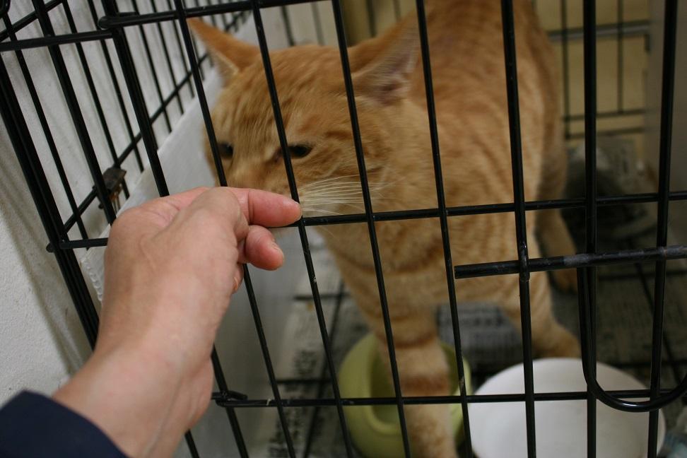 【移動先募集】センター(本所)収容猫(10/18訪問)_f0242002_16252759.jpg