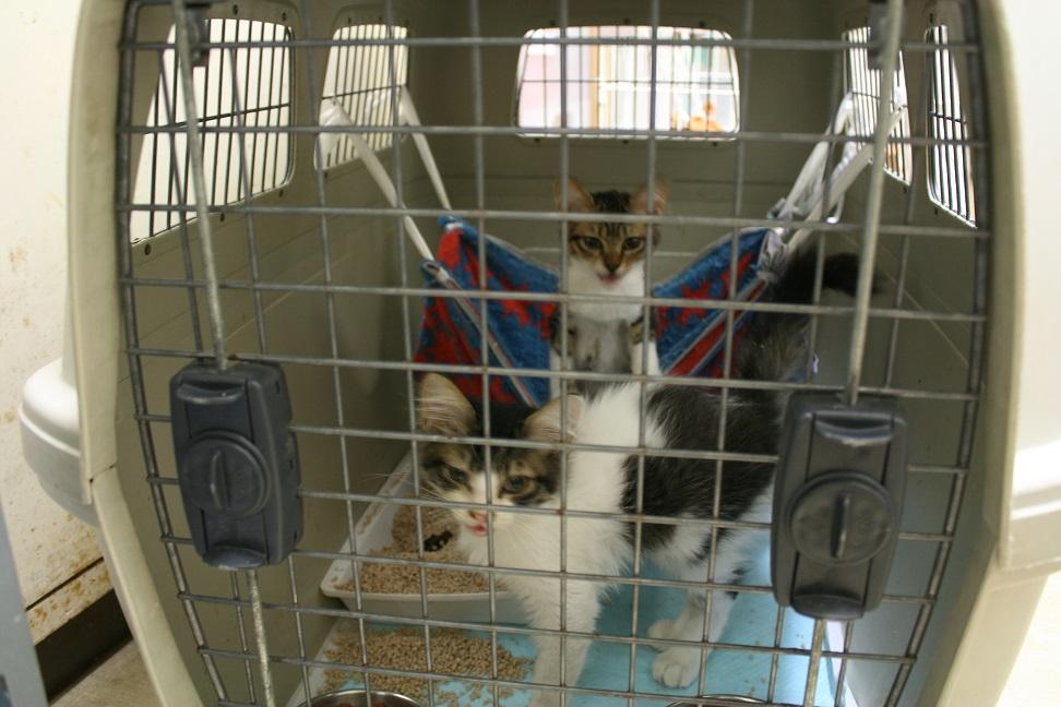 【移動先募集】センター(本所)収容猫(10/18訪問)_f0242002_16263712.jpg