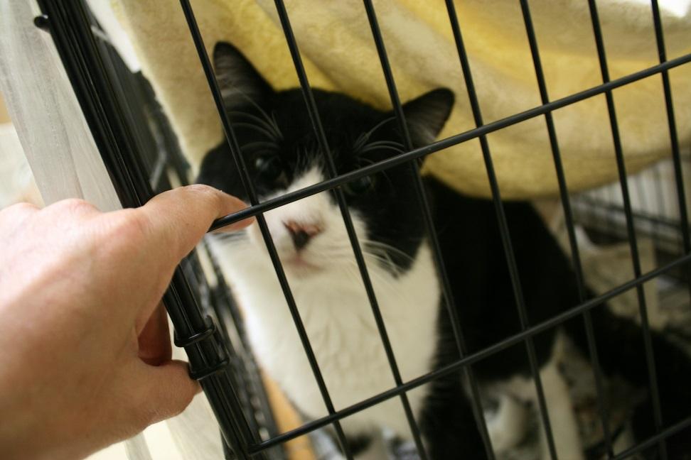 【移動先募集】センター(本所)収容猫(10/18訪問)_f0242002_16383498.jpg