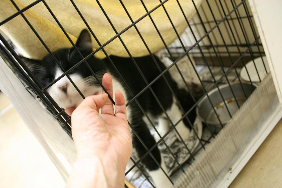 【移動先募集】センター(本所)収容猫(10/18訪問)_f0242002_163840100.jpg