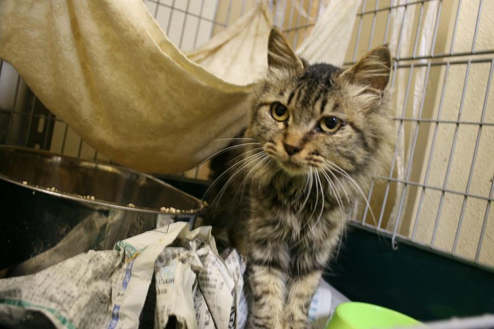 【移動先募集】センター(本所)収容猫(10/18訪問)_f0242002_1640539.jpg