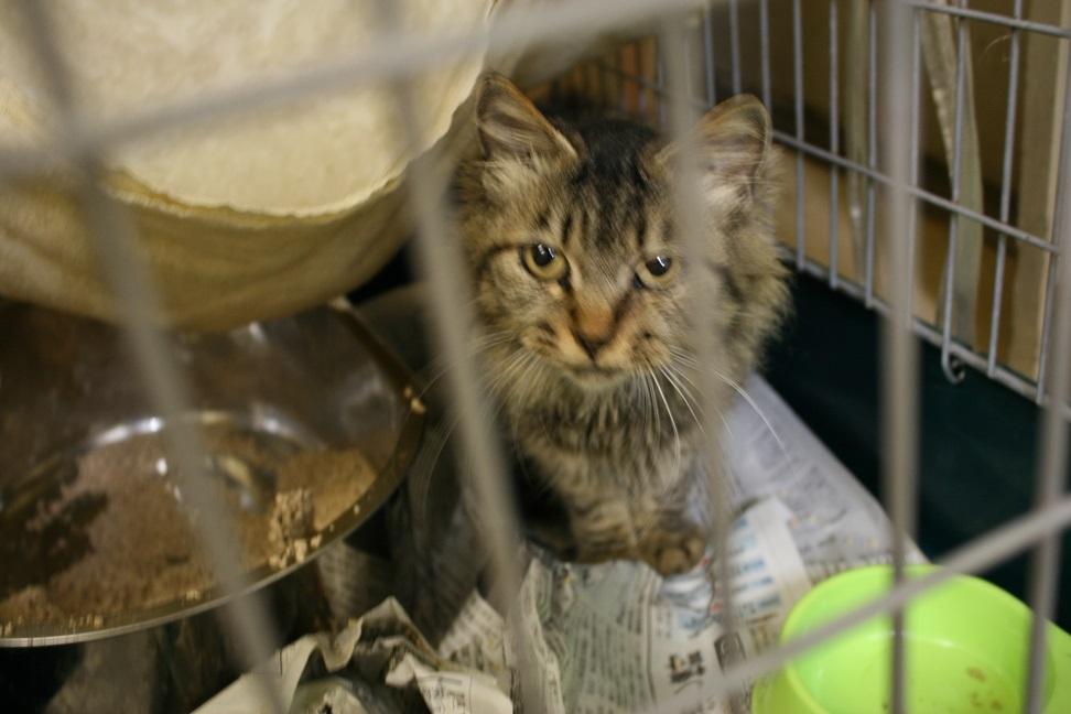 【移動先募集】センター(本所)収容猫(10/18訪問)_f0242002_1641140.jpg