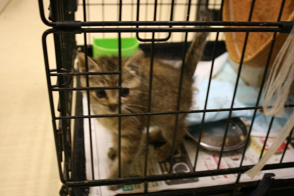 【移動先募集】センター(本所)収容猫(10/18訪問)_f0242002_16411410.jpg