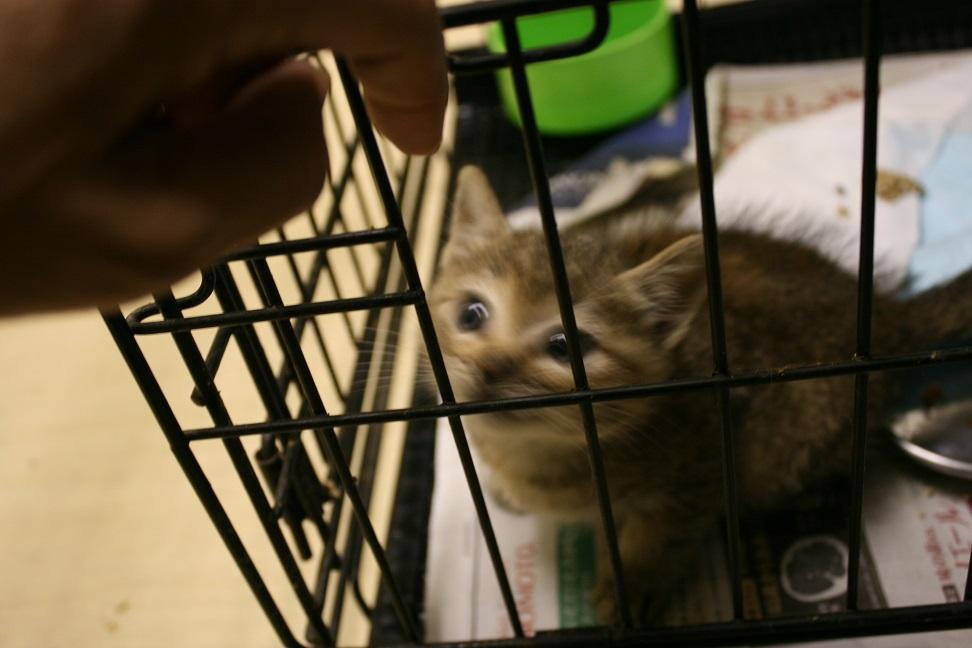 【移動先募集】センター(本所)収容猫(10/18訪問)_f0242002_16412062.jpg