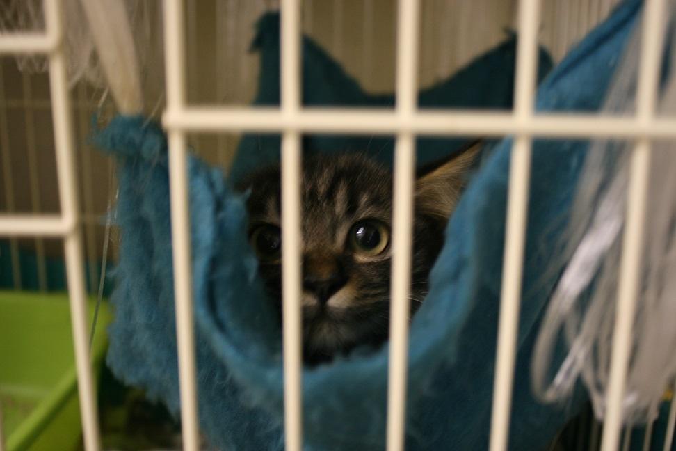 【移動先募集】センター(本所)収容猫(10/18訪問)_f0242002_16412949.jpg