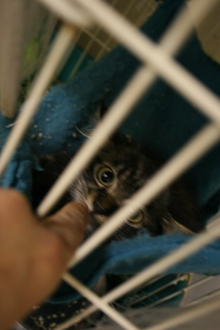 【移動先募集】センター(本所)収容猫(10/18訪問)_f0242002_16413878.jpg