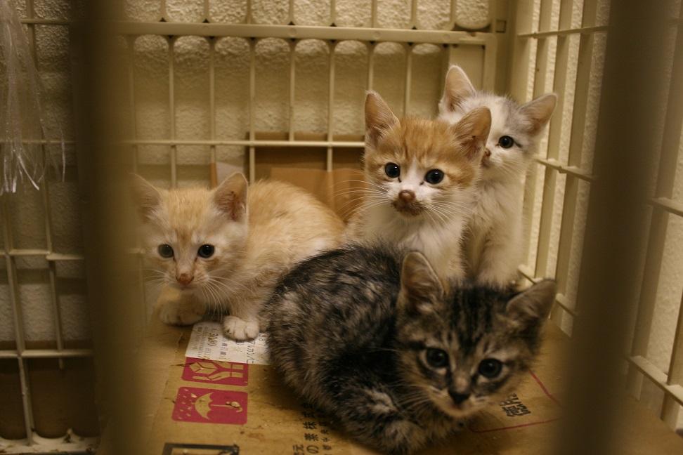 【移動先募集】センター(本所)収容猫(10/18訪問)_f0242002_16414669.jpg