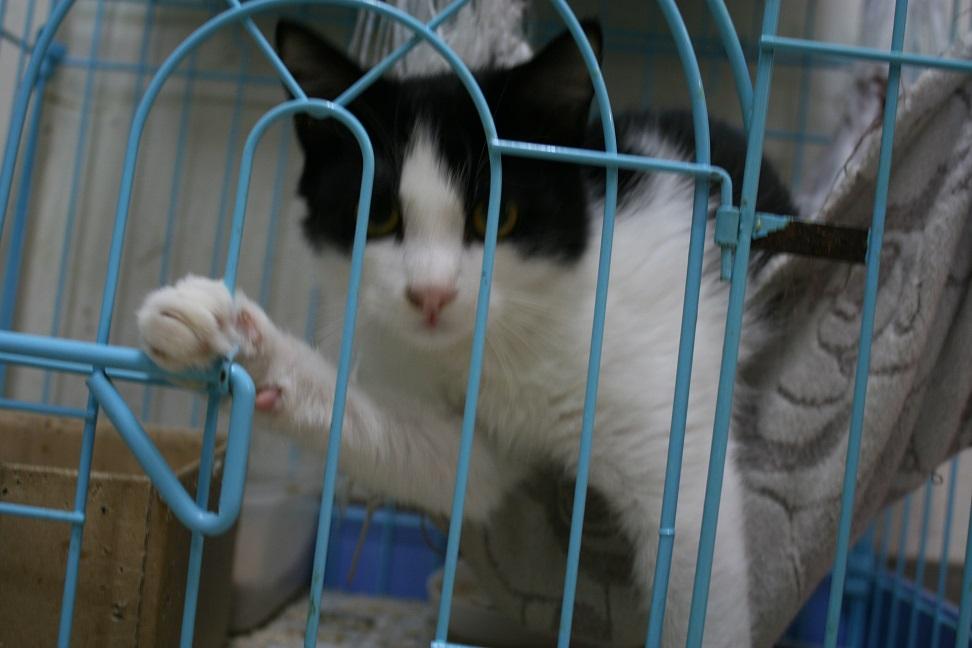 【移動先募集】センター(本所)収容猫(10/18訪問)_f0242002_16415554.jpg