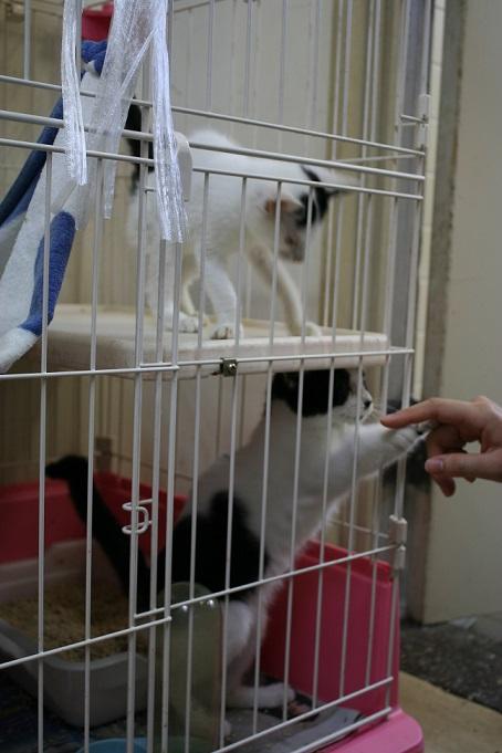 【移動先募集】センター(本所)収容猫(10/18訪問)_f0242002_16421596.jpg