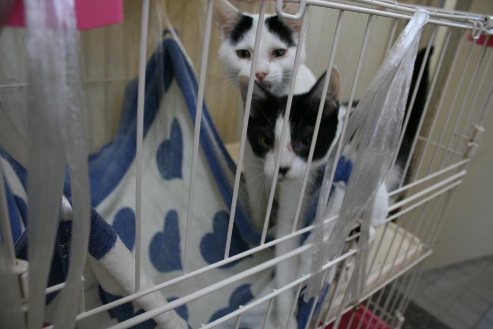 【移動先募集】センター(本所)収容猫(10/18訪問)_f0242002_16422537.jpg