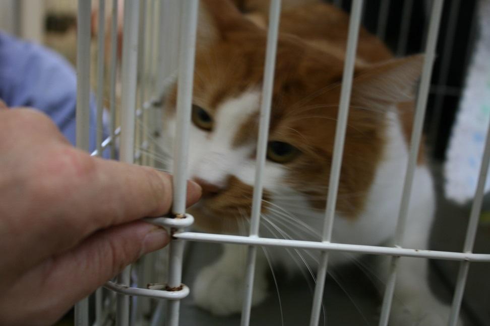 【移動先募集】センター(本所)収容猫(10/18訪問)_f0242002_16423676.jpg