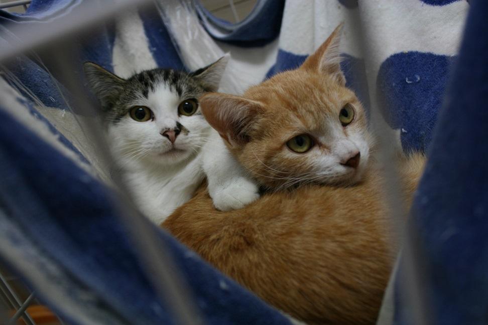 【移動先募集】センター(本所)収容猫(10/18訪問)_f0242002_16424512.jpg