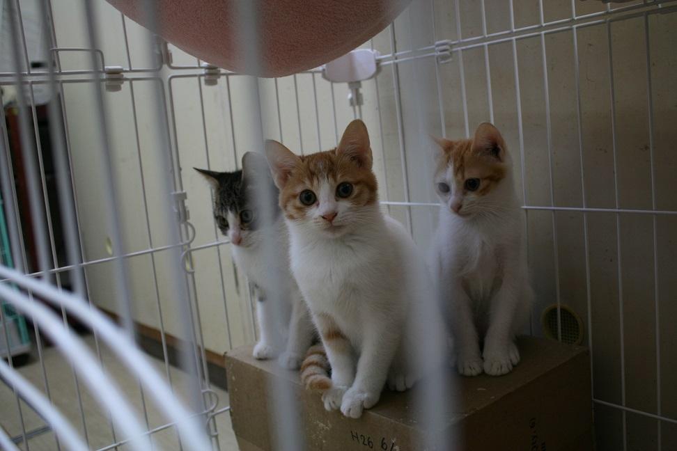 【移動先募集】センター(本所)収容猫(10/18訪問)_f0242002_16425682.jpg