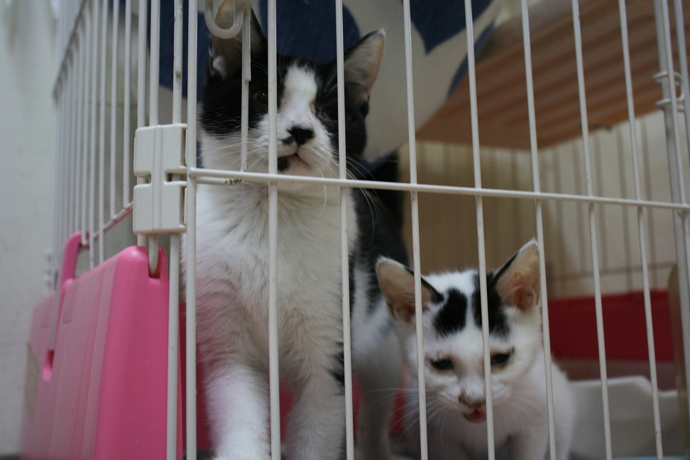 【移動先募集】センター(本所)収容猫(10/18訪問)_f0242002_16427100.jpg