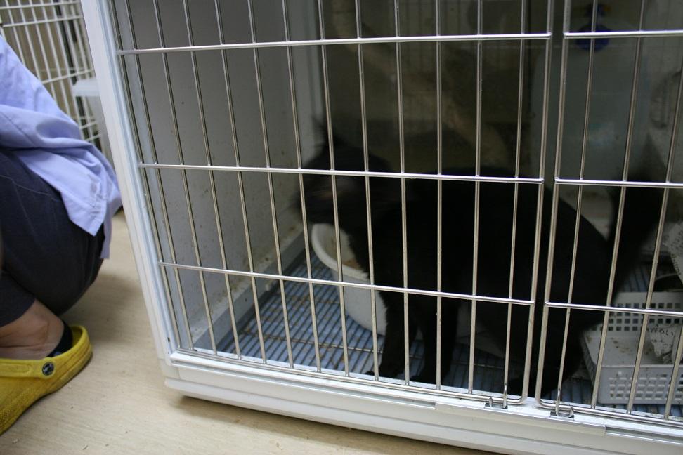 【移動先募集】センター(本所)収容猫(10/18訪問)_f0242002_1643117.jpg