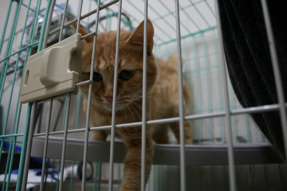 【移動先募集】センター(本所)収容猫(10/18訪問)_f0242002_16432166.jpg