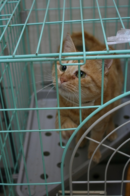 【移動先募集】センター(本所)収容猫(10/18訪問)_f0242002_16432876.jpg