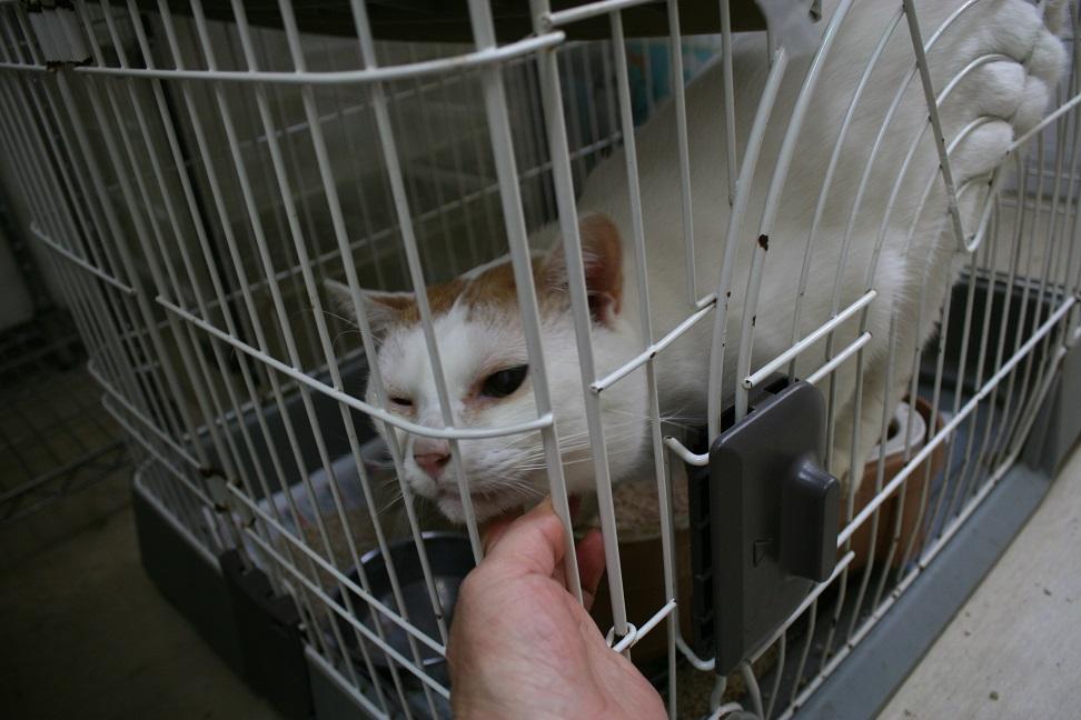 【移動先募集】センター(本所)収容猫(10/18訪問)_f0242002_1643432.jpg