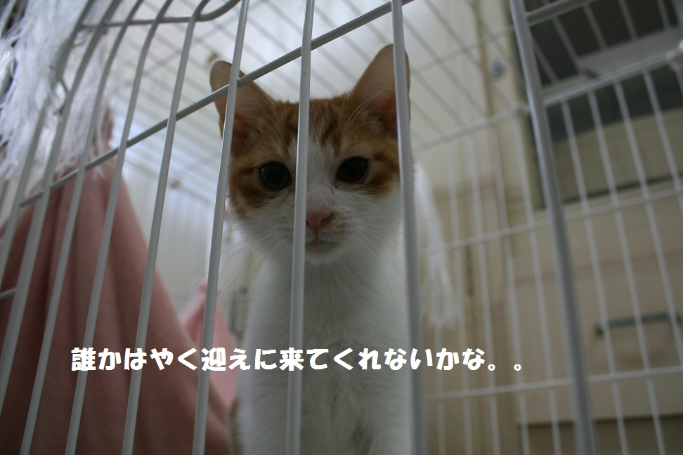 【移動先募集】センター(本所)収容猫(10/18訪問)_f0242002_1643453.jpg