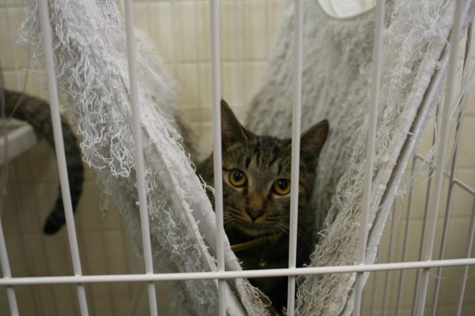 【移動先募集】センター(本所)収容猫(10/18訪問)_f0242002_16435125.jpg