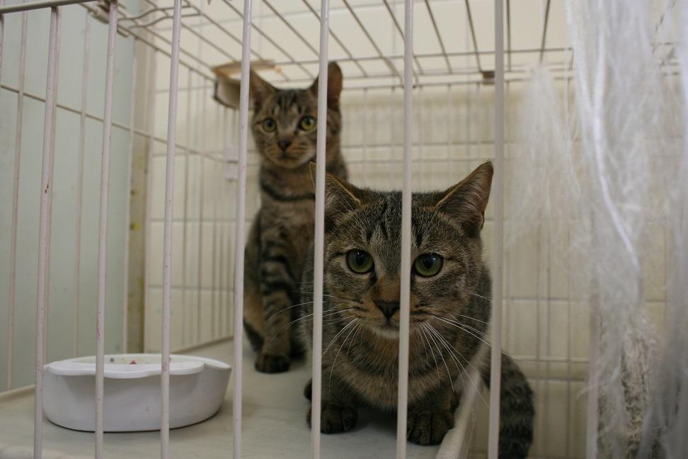 【移動先募集】センター(本所)収容猫(10/18訪問)_f0242002_16435781.jpg