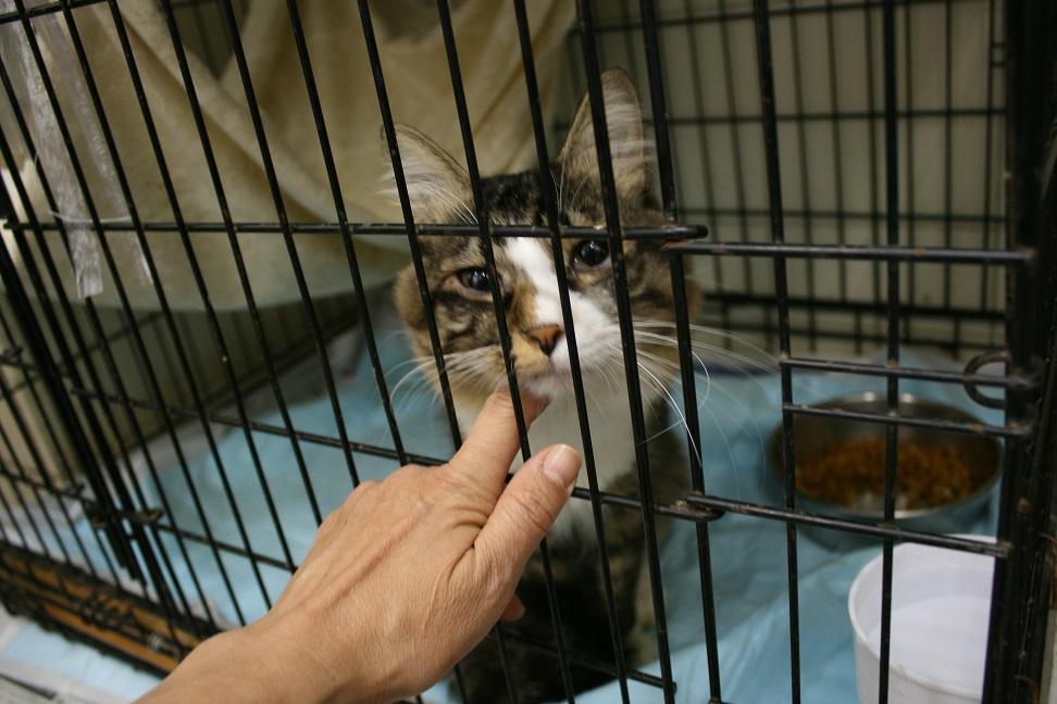 【移動先募集】センター(本所)収容猫(10/18訪問)_f0242002_16441459.jpg