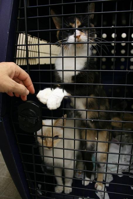 【移動先募集】センター(本所)収容猫(10/18訪問)_f0242002_16442359.jpg