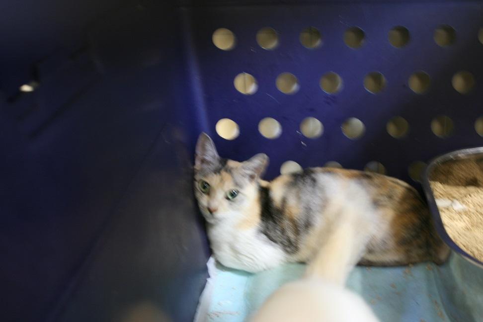 【移動先募集】センター(本所)収容猫(10/18訪問)_f0242002_16443054.jpg