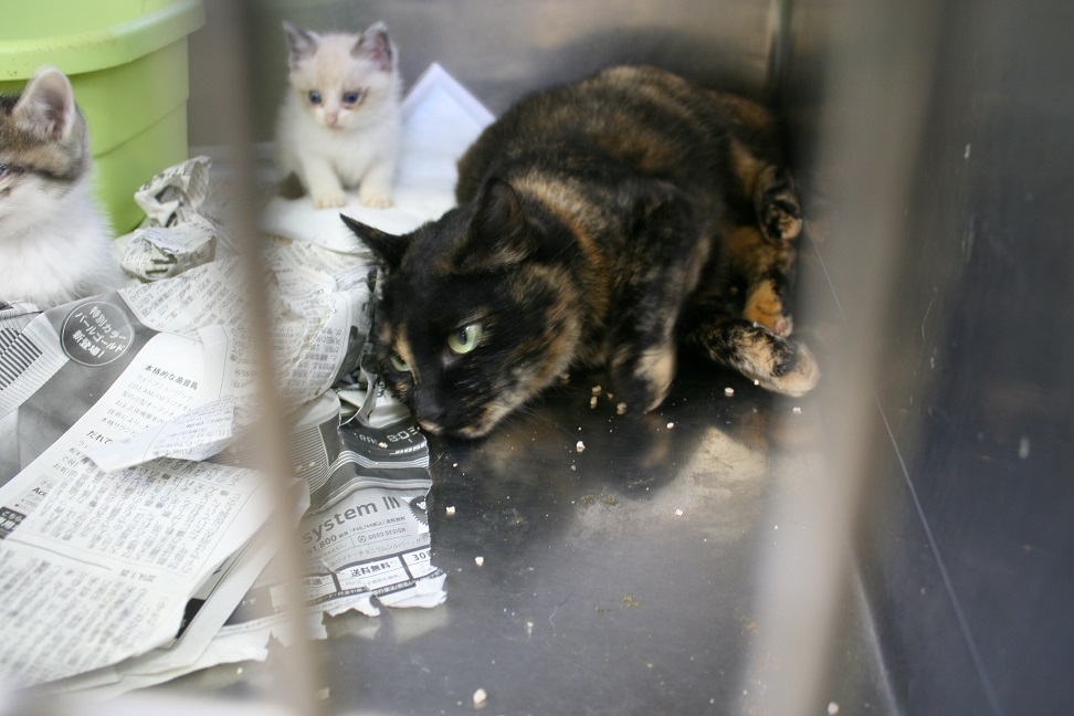 【移動先募集】センター(本所)収容猫(10/18訪問)_f0242002_16445173.jpg