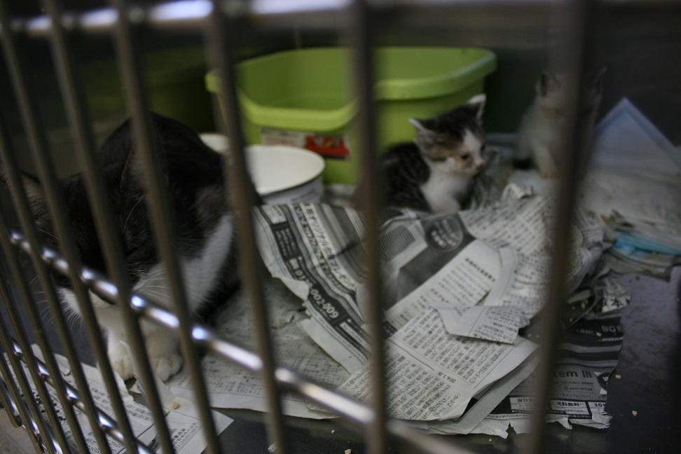 【移動先募集】センター(本所)収容猫(10/18訪問)_f0242002_16445837.jpg