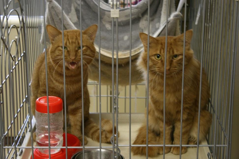 【移動先募集】センター(本所)収容猫(10/18訪問)_f0242002_16451189.jpg