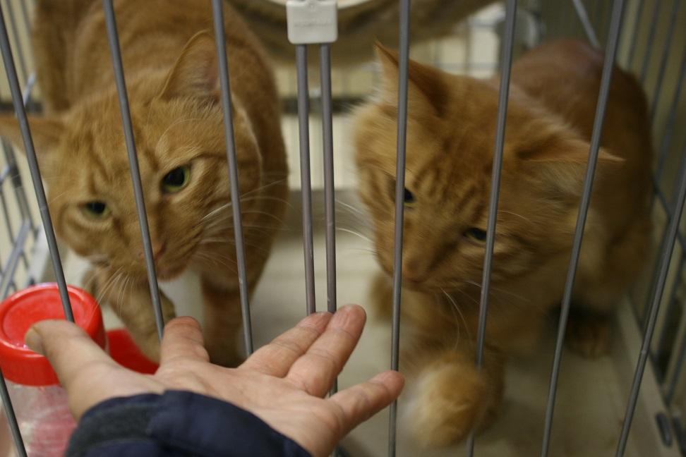 【移動先募集】センター(本所)収容猫(10/18訪問)_f0242002_16451864.jpg