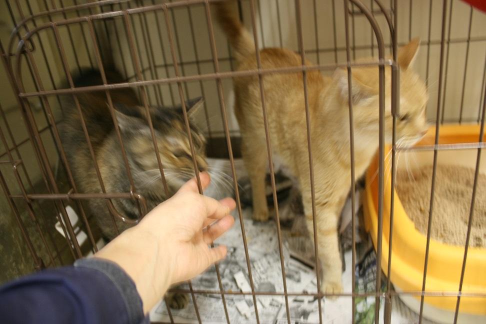【移動先募集】センター(本所)収容猫(10/18訪問)_f0242002_16453138.jpg