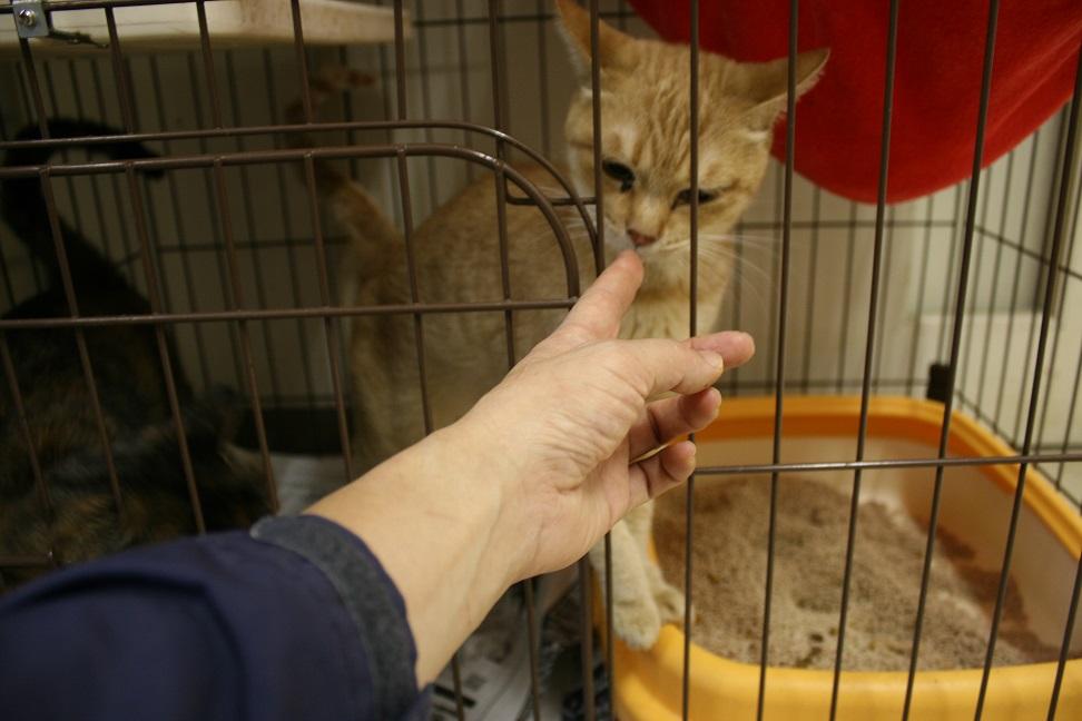 【移動先募集】センター(本所)収容猫(10/18訪問)_f0242002_16453818.jpg