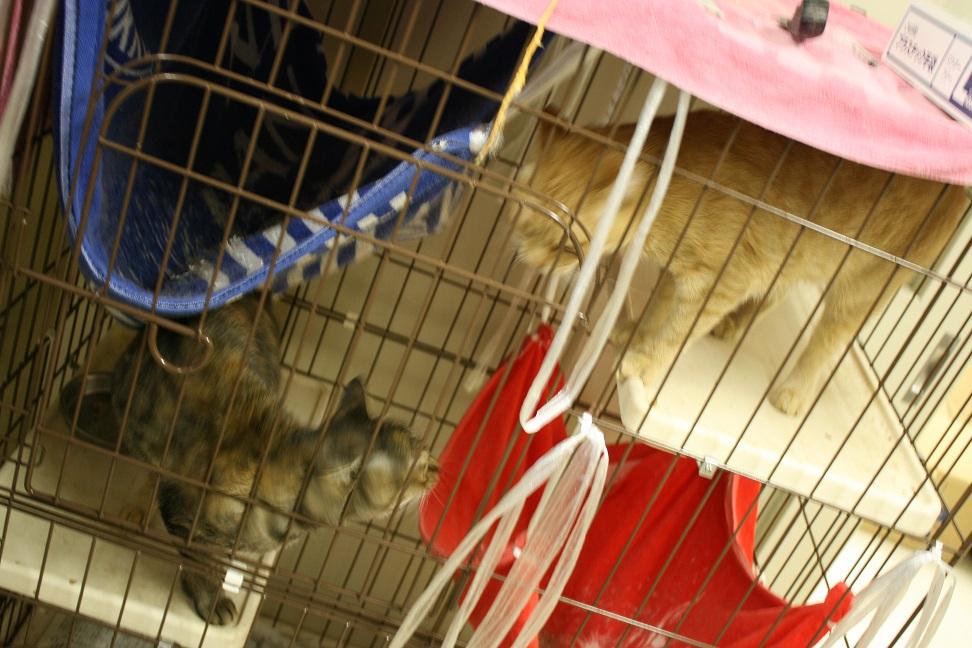 【移動先募集】センター(本所)収容猫(10/18訪問)_f0242002_16454921.jpg