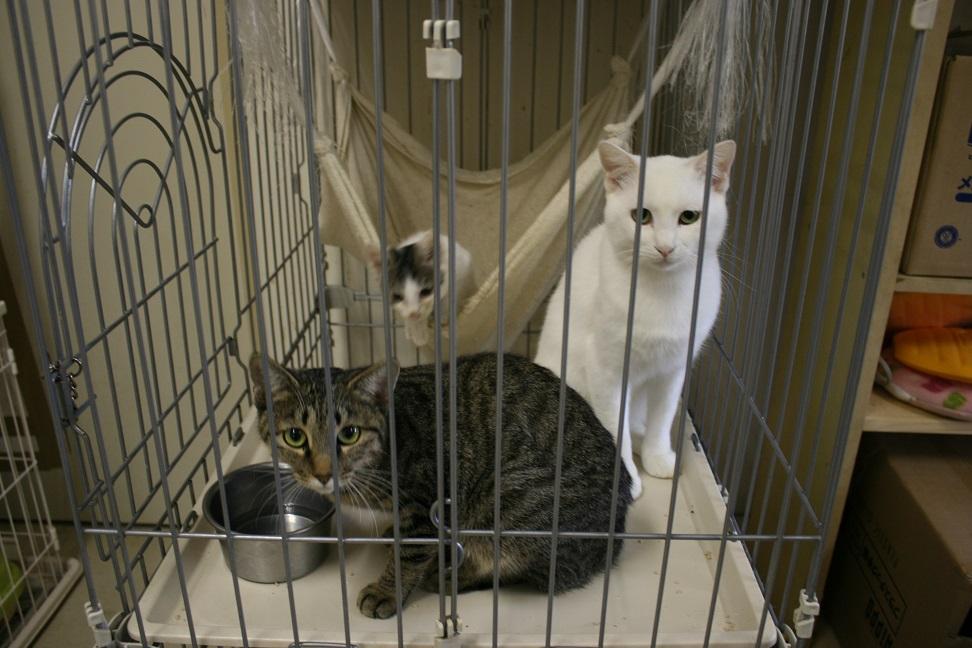 【移動先募集】センター(本所)収容猫(10/18訪問)_f0242002_16472666.jpg