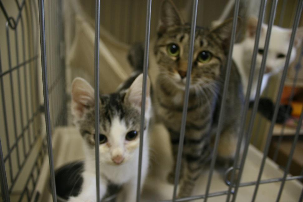 【移動先募集】センター(本所)収容猫(10/18訪問)_f0242002_16473453.jpg