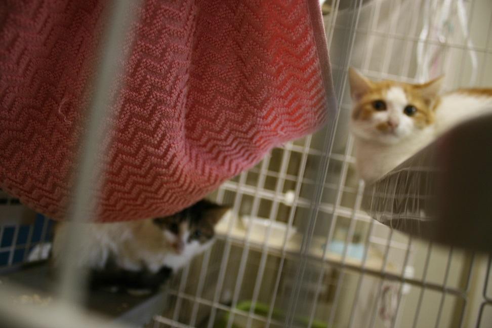 【移動先募集】センター(本所)収容猫(10/18訪問)_f0242002_16474420.jpg