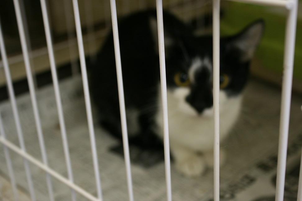 【移動先募集】センター(本所)収容猫(10/18訪問)_f0242002_16475696.jpg