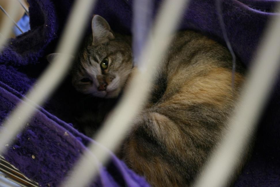 【移動先募集】センター(本所)収容猫(10/18訪問)_f0242002_16481663.jpg