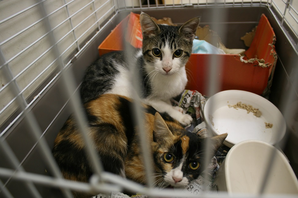 【移動先募集】センター(本所)収容猫(10/18訪問)_f0242002_16583886.jpg