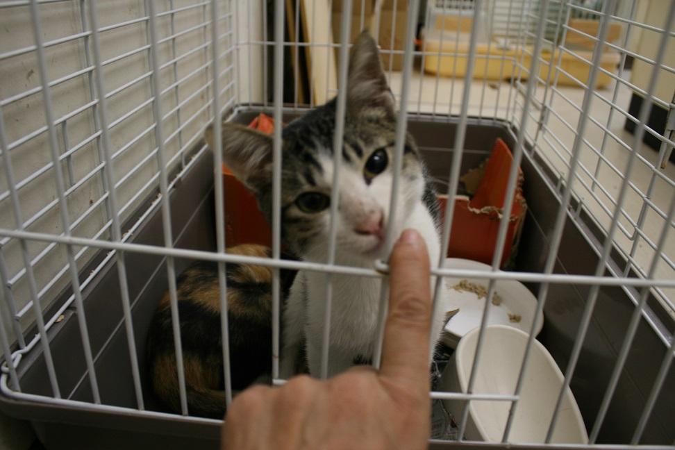 【移動先募集】センター(本所)収容猫(10/18訪問)_f0242002_16584593.jpg