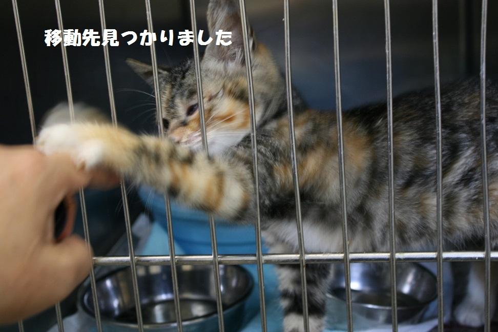 【移動先募集】センター(本所)収容猫(10/18訪問)_f0242002_16595438.jpg