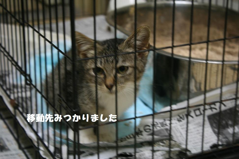 【移動先募集】センター(本所)収容猫(10/18訪問)_f0242002_1701255.jpg