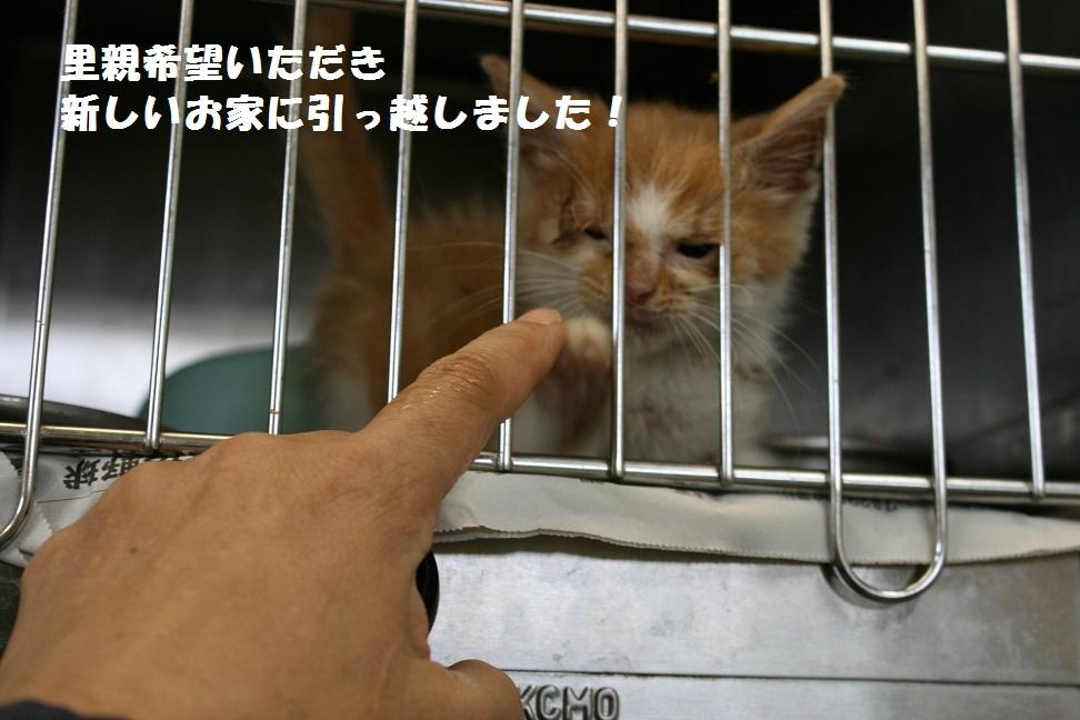 【移動先募集】センター(本所)収容猫(10/18訪問)_f0242002_170339.jpg
